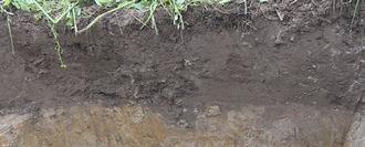 1. Bodems en grondsoorten